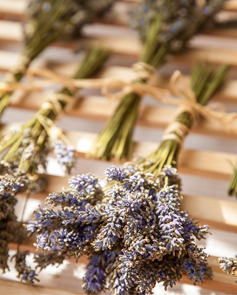 How to Dry Lavender – Susan Penny